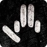 sufi_logo_greyscale